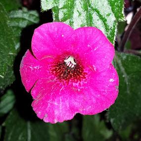 Pink flower by Aleksa Stankovic - Flowers Flowers in the Wild ( flower )