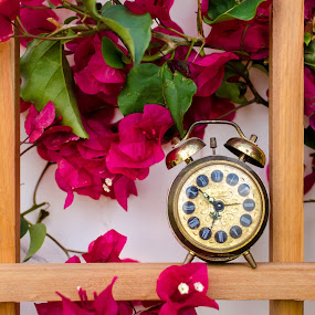 Antique alarm clock on Bougainvillea Trellis by Emily Stillings - Artistic Objects Antiques ( time, e.j.stillings photography, alarm, bougainvillea, clock, trellis, outdoor, emily stillings, bloom, antique, burgundy, flower,  )