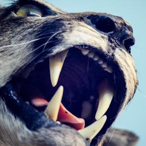 just a cat  by Nur Saputra - Animals Lions, Tigers & Big Cats