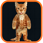 Real Talking Cat 1.2 APK for Android APK