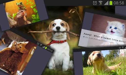 Cute Addict - Animal pictures- screenshot thumbnail