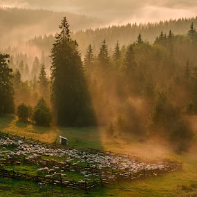 Work and sunrise by Florin  Galan - Landscapes Forests ( home, landscape, revive, nature, emotions, light, forests, earthly, green, jade, mood, forest, scenic, relaxing, views, trees, meditation, earth, sunrise, landscapes, bucovina, renewal, natural, the mood factory, inspirational,  )