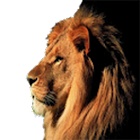 اصوات الحيوانات icon