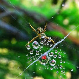 Web 10 by Asif Bora - Nature Up Close Webs ( , Backyard, insects, reptiles, living creatures, green, colors, daily life, web, spiderweb )