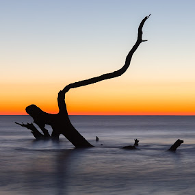 Eternal Sunrise by Eli Ditmore - Landscapes Beaches ( calm, driftwood, colors, serene, minimalism, minimal, sunrise,  )