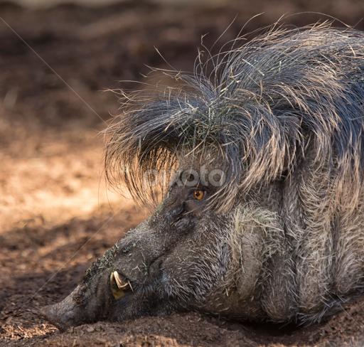 Superb Bad Hair Day Other Mammals Animals Pixoto Hairstyles For Women Draintrainus