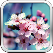 Beautiful Flowers Wallpapers ✿