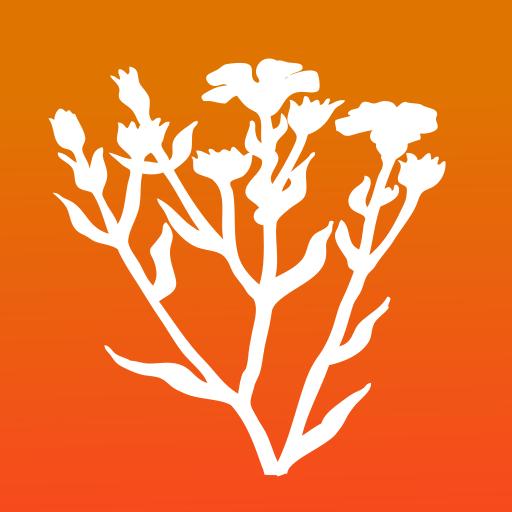 Bachblüten für Kinder PRO | Homöopathische Helfer