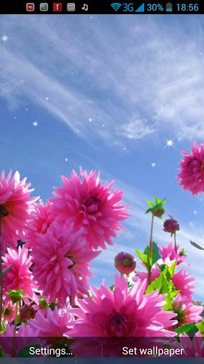 春天的花朵動態壁紙