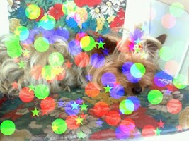 Screenshot of PhotoDream Photo Effects Free