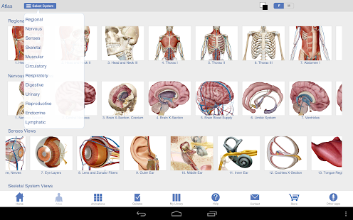 Human Anatomy Atlas Screenshot 22