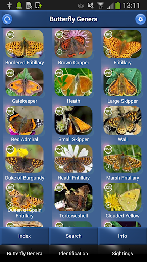 Butterfly Id - British Isles