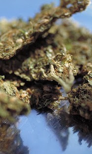 Marijuana- screenshot thumbnail
