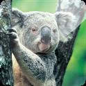 3D Koala icon