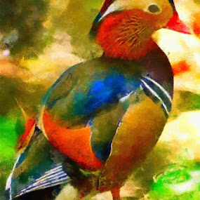 colorful fowl by Scott Bennett - Painting All Painting