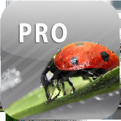 ColorUp Pro - Photo Editor