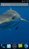 Screenshot of Shark Video Live Wallpaper