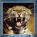 Leopard Sounds live wallpaper icon