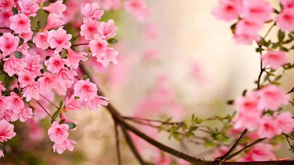 flowers in various vivid colors then spring flowers live wallpaper is