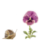Snail and Flower