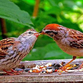 FEEDING THE BABY by Doug Hilson - Animals Birds ( colorful, cute, close up, bird feeding baby bird,  )