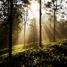 by Dhruv Ashra - Nature Up Close Trees & Bushes (  )