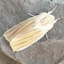 Cattail Caterpillar Moth