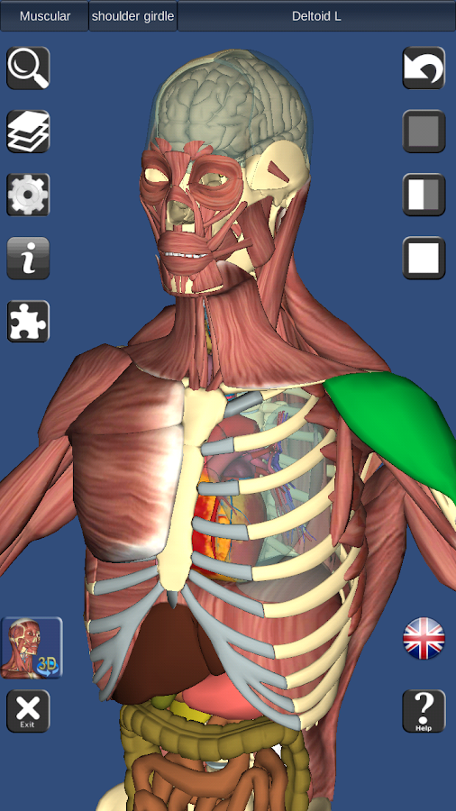 3D Anatomy Lite - screenshot