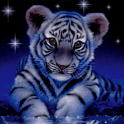 Small Tiger Under the Stars Li icon