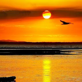 Sunset at Rockhampton Australia by Chris KIELY - Landscapes Sunsets & Sunrises ( bird, orange, sky, sunset, sunrise,  )
