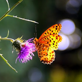 Butterfly Dreaming by Leka Huie - Animals Insects & Spiders ( , #GARYFONGDRAMATICLIGHT, #WTFBOBDAVIS )