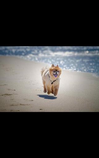 Dog Beach Live Wallpaper