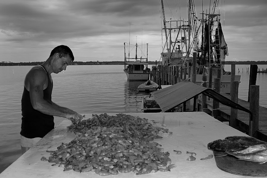 Shrimp Time by Tony Moore - People Street & Candids ( black and white, nc, shrimp, boats, dark, job, fishing, sneads ferry, landscape, man, coast,  )
