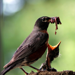Feed Me.jpg