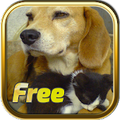 Free Dogs and Cats Puzzles
