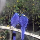 birdboy8000
