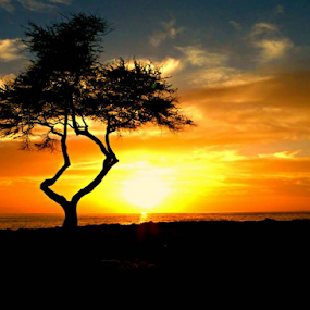 Thriving by Ad Blessings - Landscapes Sunsets & Sunrises