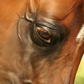 Digital Painting - RS Bareed by Manal Ali - Digital Art Animals ( equine, horses, stallions, stud, beauty, arabian, painting, digital, equestrian, eyes )