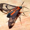 Vermillion Mimic Wasp Moth