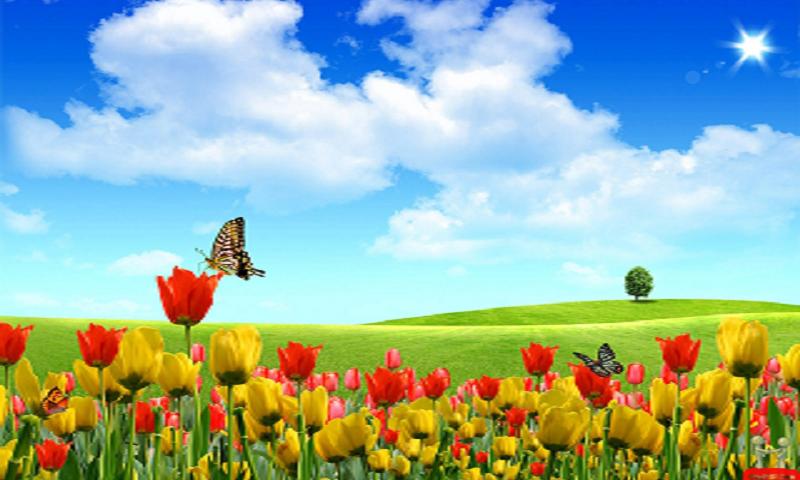 BEAUTIFUL NATURE WALLPAPERS Android App Screenshot