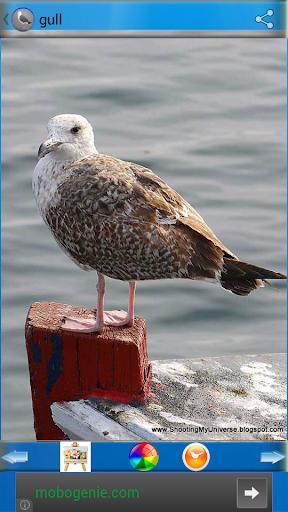 鷗或海鷗壁紙