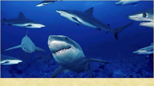 玩娛樂App|鯊魚圖片免費|APP試玩