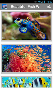 Beautiful Fish HD Wallpapers - screenshot thumbnail
