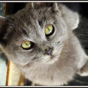 by Anna Heaslett - Animals - Cats Kittens