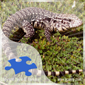 Tegus Jigsaw Puzzles icon