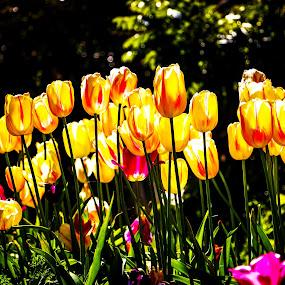 by Barry Ooi - Flowers Flower Gardens