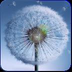 Galaxy S4 Dandelion Wallpaper