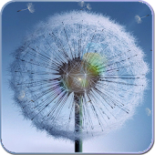 Galaxy S4 Dandelion Wallpaper
