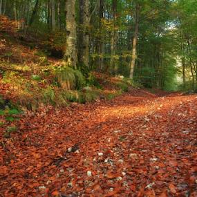 by Angelo Butera - Uncategorized All Uncategorized ( natura, colore, passeggiata, autunno, bosco )