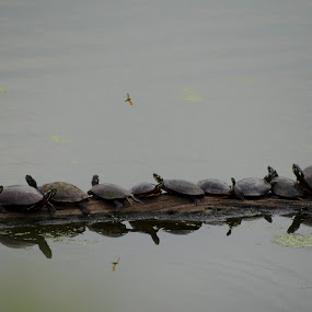 Sunday Click by Palak Patel - Animals Other